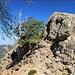 auf dem Weg zum Vorgipfel umgehen wir ein Felshindernis links