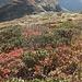 Herbstfarben beim Kreuz über Hinterbalm.