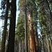 Waldeindrücke im Crescent Meadow Wald