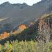 Herbstimpression I