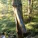 ein Holzelefantenbrunnen