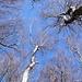 Auch die Bäume erfreuen sich am blauen Himmel.