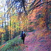 Herbsteindrücke I