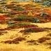 nicht zu überbietender Farbexperte: die Natur