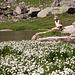 Fioritura di eriofori ... e fate sul laghetto a 2206m. della Randinascia