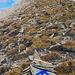 """Ultra deutliche Markierungen leiten auf die Hohwang, danke dem """"Mark-ierer"""" (-:"""