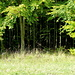 Der Baumbestand hat sich auf der Sophienhöhe seit der Freigabe für die Öffentlichkeit prächtig entwickelt. Wälder sind entstanden.