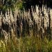 Wenig anspruchsvolle Gräser gedeihen auf der Sophienhöhe.