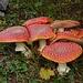 Der Regen lässt die Pilze spriessen.
