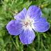 Die Blumenvielfalt für diese Jahreszeit war beachtlich