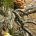 Pilze: hoch oben in den Bäumen