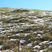 Erba e neve (a quota 1300 m)