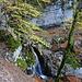 Steiler Aufstieg zur Alp Mans durch herbstlichen Wald.