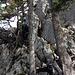 Schönes gekraxel mit guten Griffen aus Fels oder Holz