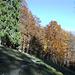 Abstieg durch den farbigen Herbstwald