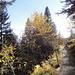 Durch den Herbstwald zurück nach Mittel Arni