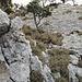 Der letzte sehr steile Aufstieg auf den Goggeien Schär Südgipfel. Oberen T6 ll