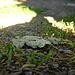 <br />♬♫♩...Come foglie...♫♬♩<br /><br /><br />(Malika Ayane)<br />[https://www.youtube.com/watch?v=3LgBfE-u9XY]<br />___________<br />________