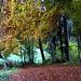 schöne Herbstfarben