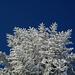 Schnee und stahlblauer Himmel – was hat der Winter mehr zu bieten?