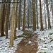 Kurz nach dem Start beim Sommerparkplatz liegt im Wald noch nicht allzuviel Schnee