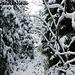 Nach oben nimmt die Schneehöhe langsam zu