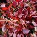 Herbstzauber im Kleinen