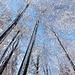 Bäume im temporären Winterkleid.
