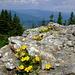 Peisaj cu flori de munte(Landscape with flower mountain)