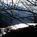 luci tra gli alberi sul lago di Garlate