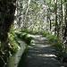 später z. T. durch Wald