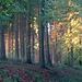 Letztes Licht im Wald