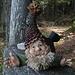 ein Tannzapfen-Mandli: listiger kleiner Kerl