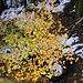 Ein letztes Aufbäumen des Herbsts...