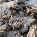 Nahaufnahme der kleinen, quirligen Termiten