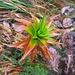 typische Regenwaldpflanze