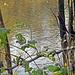 Blick vom Hochwasserdamm auf die Isar