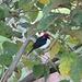 auf morgendlicher Vogel-Fotopirsch in den Llanos