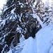 Nel bosco la neve molto abbondante ci crea qualche problema.