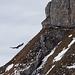 Am Furggegütsch kreist ein junger Adler