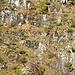 Das Drahtseil verratet den Weg am Gegenhang - uns Abstieg von der Forcola