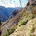 Nun der Abstieg auf der andern Seite des Cavüria-Grabens