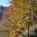 Schnee und die Farben des Herbstes im Val Vergeletto