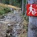 Foto von der zweiten Besteigung am 4./5.11.2012:<br /><br />Auf dem steinigen Strässchen unterhalb Schärpfeberg lässt sich aber ein Fahrrad gar nicht einfach nur am Sattel schieben :-)