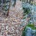 Der alte Weg nach Verdabbia führt durch Kastanienhaine und terrassiertem Gelände