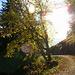 """Goldener Herbst"""