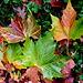 Herbst !
