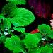 Kleine große Welten im nassen Wald