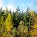 Deisterwald in der Herbstsonne.