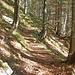Im Herbst zeigt sich der Mischwald besonders schön.